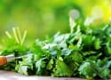 How to Chop Cilantro