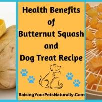 Dehydrated Butternut Squash Dog Treats