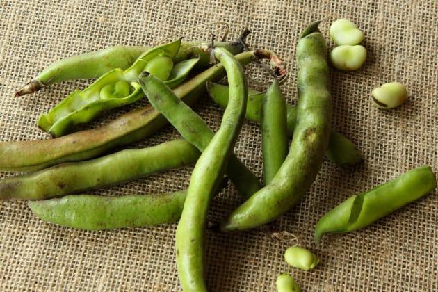 Raw Fava Beans