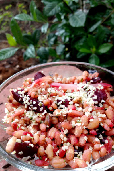 Barley Beet Salad Picture