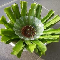 Winged bean with Asian dipping Sauce