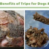 Dried Tripe Sticks for Dogs Recipe