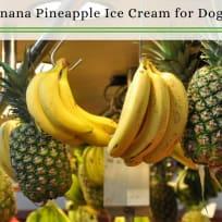 Dog Ice Cream Recipe | Healthy Banana Pineapple Ice Cream That You Can Share! | Homemade Dog Ice Cream